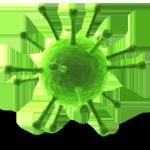 Der Herpes simplex Virus